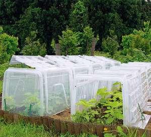 pflanztunnel-bietet-schutz-im-garten