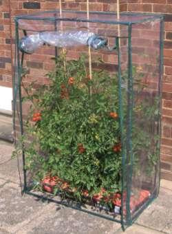 Gewächshaus Selber Bauen tomatenzelt kaufen oder mit bauanleitung selber bauen gewächshaus