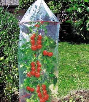 tomatenreifehaube-günstig-und-stabil-nicht-aus-holz