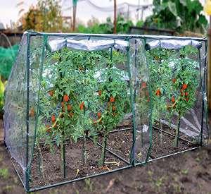 tomatenhaus g nstig kaufen oder selber bauen gew chshaus profi. Black Bedroom Furniture Sets. Home Design Ideas